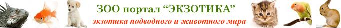 зоо портал Экзотика